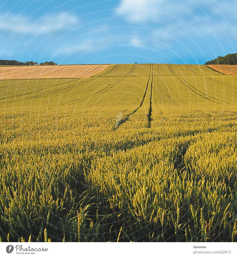 Nature Sky Plant Far-off places Field Horizon Growth Grain Agriculture Harvest Wheat Crops