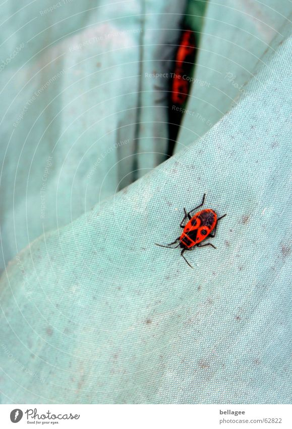 What are they doing? Poison Red Bug Animal Bah Animalistic Beetle Blue crawl make love Blanket they are everywhere Escape Propagation
