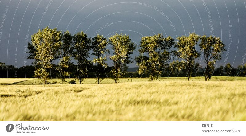 Tree drama/lol Field Fear Row of trees Landscape Deserted Cornfield Central perspective