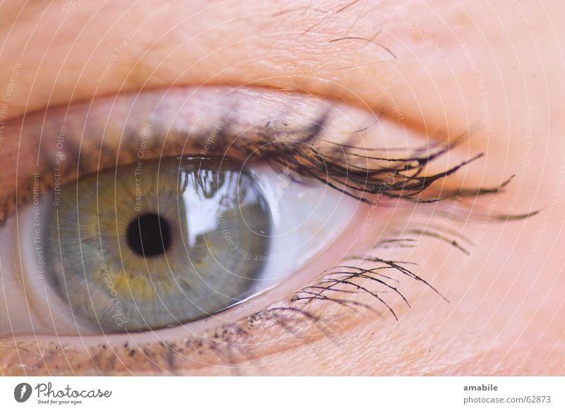 Human being Blue Colour Eyes Eyelash Pupil Iris Vision Skin color Contact lense Eye colour