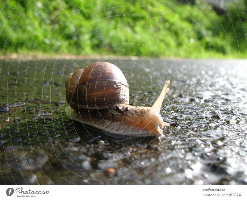Street Rain Snail Vineyard snail
