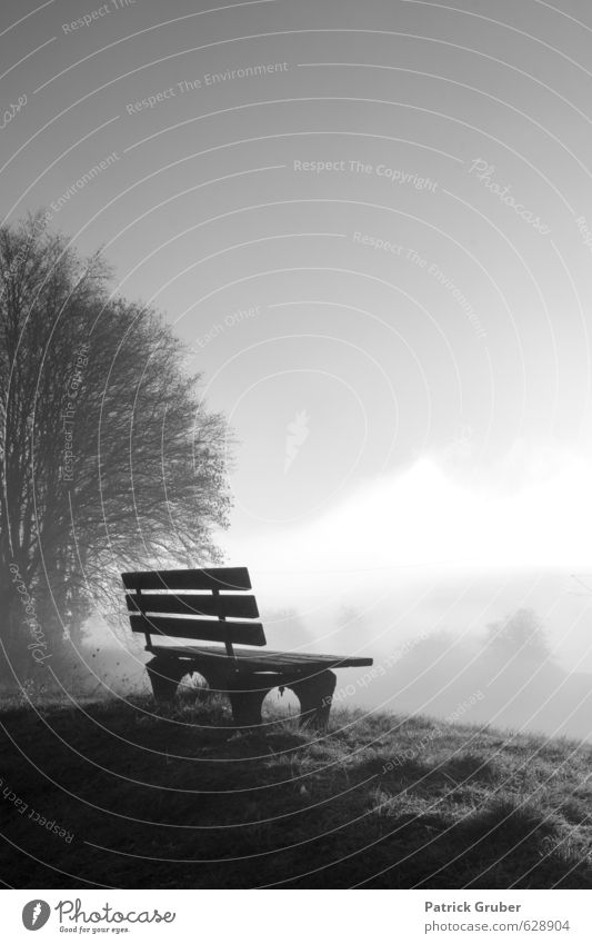 Lonely bench in the morning fog Landscape Fog Meadow Village Contentment Loneliness Culture Art Stagnating Dream Bench Rest bench Dawn Resting point Nature