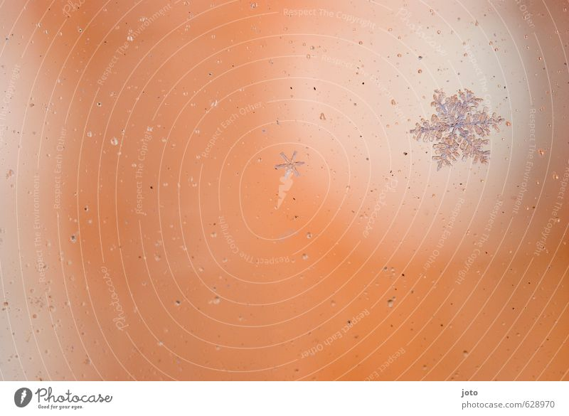shaped cold Christmas & Advent Nature Winter Ice Frost Snow Cold Wet Orange White Transience Change Melt Ice crystal Seasons Delicate Pure Star (Symbol)