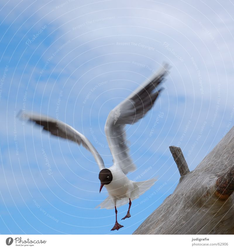 landing Clumsy Lake Seagull Bird Clouds Summer Tree Wood Beach Ocean Vacation & Travel Feather Beak Crash Contentment Fischland Western Beach Black-headed gull