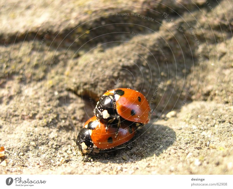 Nature Red Summer Joy Animal Above Emotions Spring Sand Happy Small Stone 2 Together Rock Pair of animals
