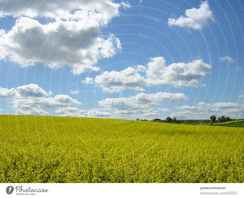 Sky Nature Blue Beautiful Clouds Calm Yellow Meadow Freedom Germany Field Multiple Many Countries Serene Americas