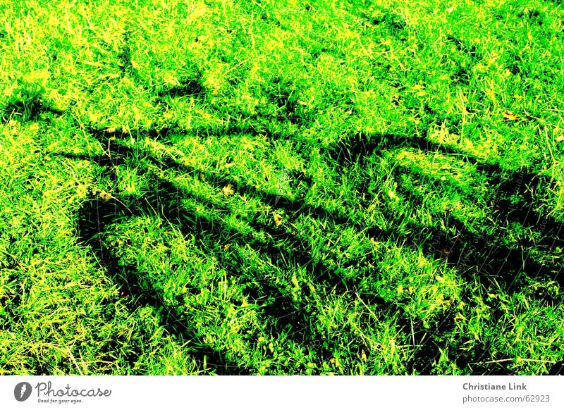 bicycle shadow Bicycle Meadow Grass Green Summer Shadow Movement Nature Sun Joy Exterior shot