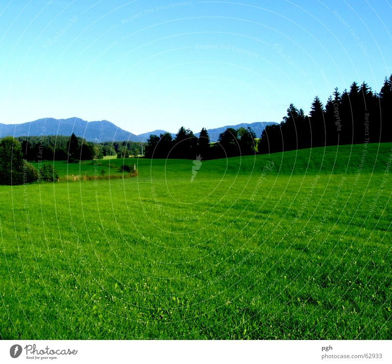 Juicy Bavarian meadow near Iffeldorf Forest Green Landscape Mountain Sky green lush meadow Blue