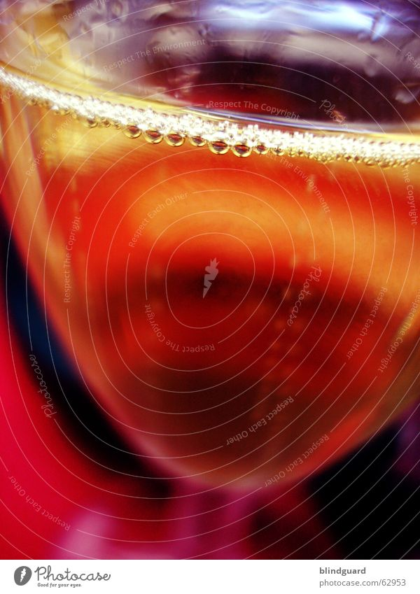 pearl necklace Sparkling wine Carbonic acid Beverage Drinking Happiness Exuberance Play of colours Champagne bubbles Glittering Betrothal Damp Wet Transparent
