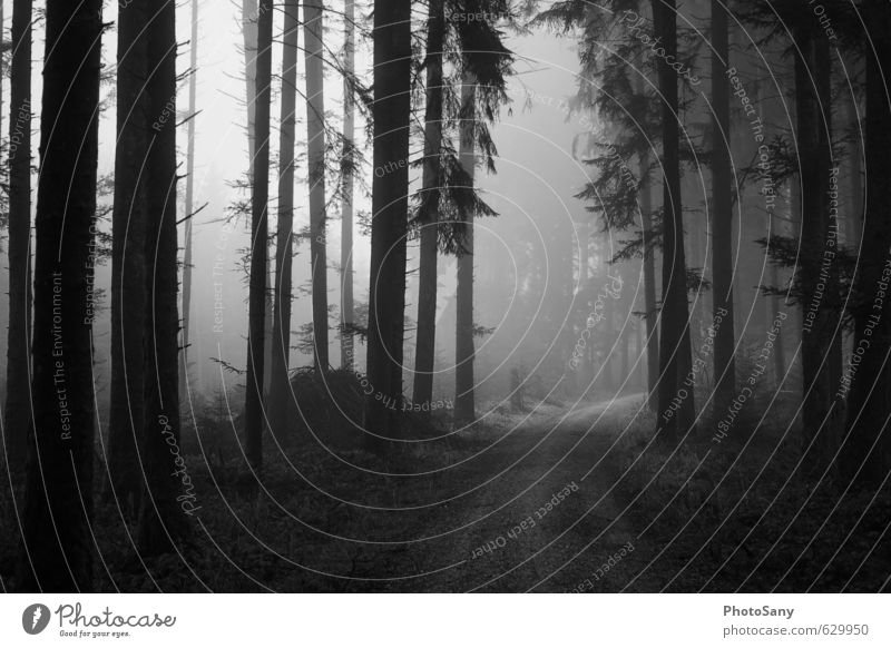 away into nowhere Nature Autumn Weather Fog Tree Forest Gray Black Moody Footpath Dark Black & white photo Exterior shot Deserted Day Shadow Contrast Wide angle