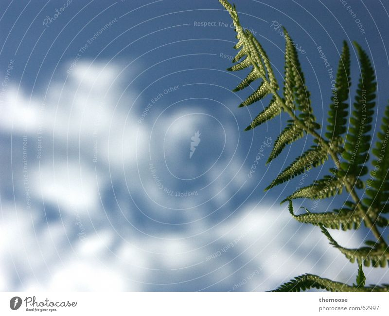 Nature Beautiful Sky Plant Above Growth Under Peaceful Pteridopsida