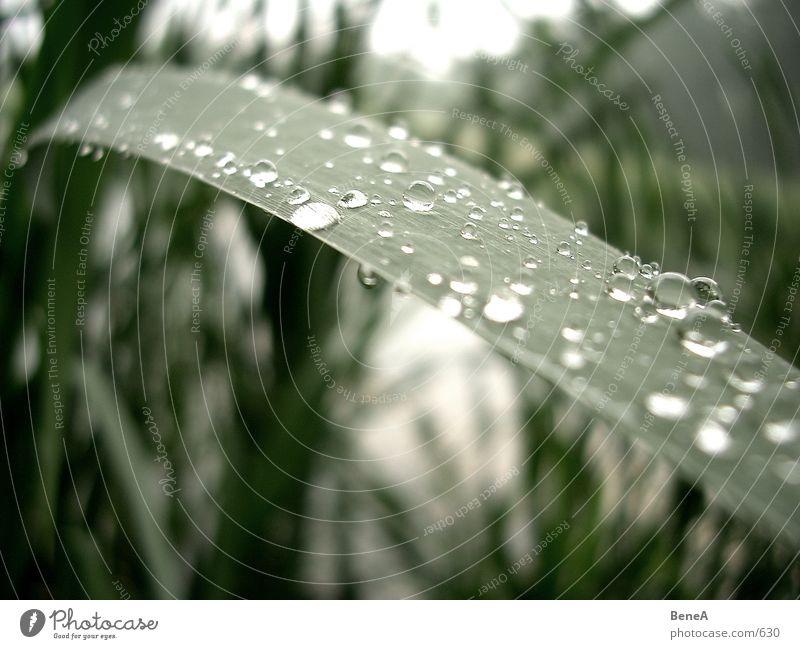 Nature Water Green Plant Leaf Autumn Gray Sadness Lake Rain Landscape Drops of water Wet Hope Grief Growth