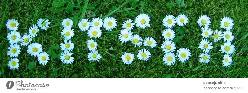 Summer Spring Lawn Characters Kitsch Letters (alphabet) Daisy Flower