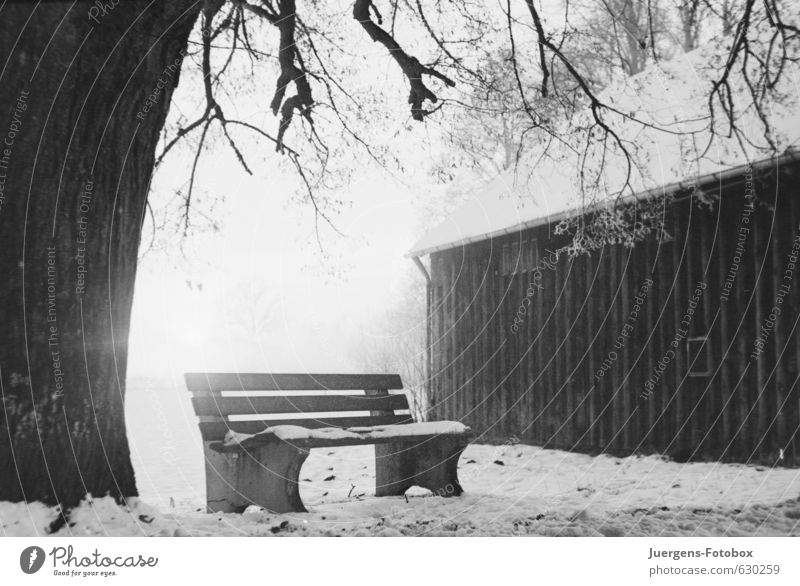 seat Nature Winter Snow Tree Field Deserted Hut Concrete Wood Freeze Hiking Wait Authentic Bright Cold Black White Humble Sadness Grief Pain Loneliness Distress