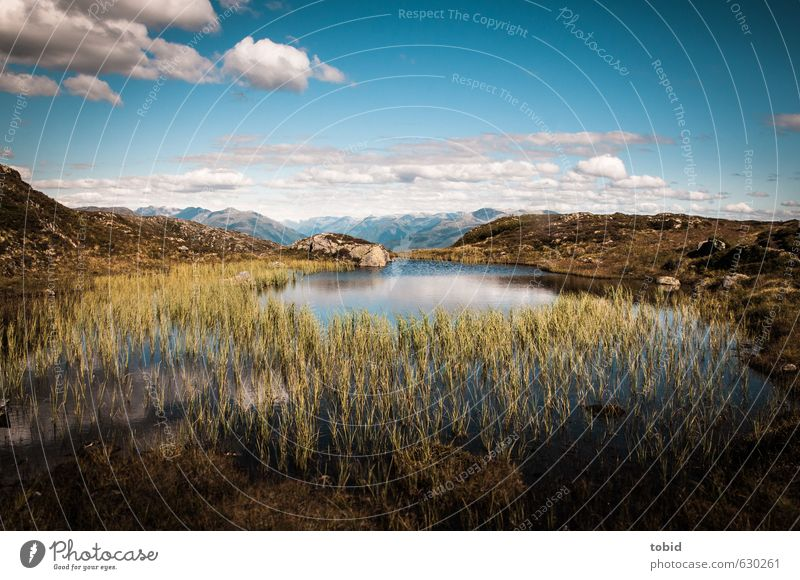 Sky Nature Plant Summer Water Sun Landscape Clouds Far-off places Mountain Grass Freedom Lake Earth Horizon Idyll