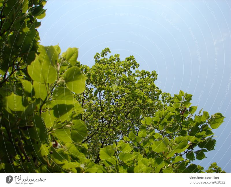 Nature Sky Tree Green Blue Plant Summer Leaf Relaxation Spring Feasts & Celebrations Wind Fresh Growth Lie Thin