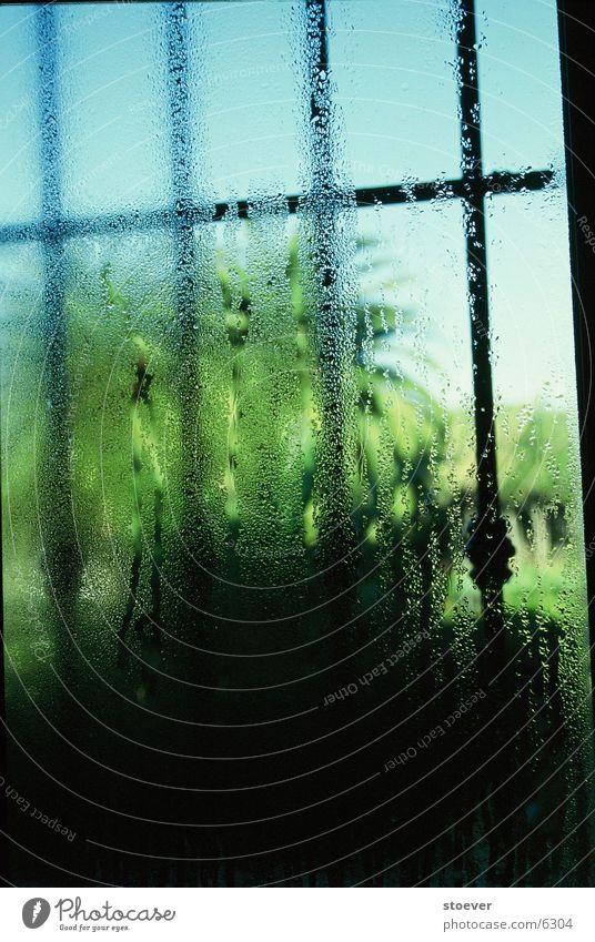 Bathroom Palm tree Condensation