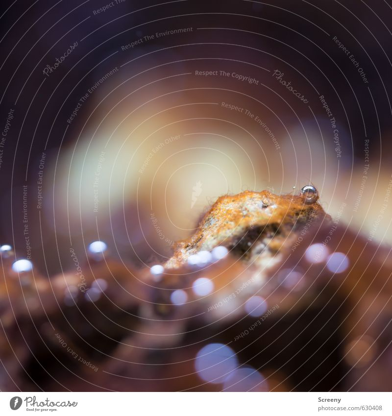 bubbly Water Rock Brown Underwater photo Aquarium Air Air bubble Blur Glittering Surface tension Colour photo Macro (Extreme close-up) Deserted Copy Space top