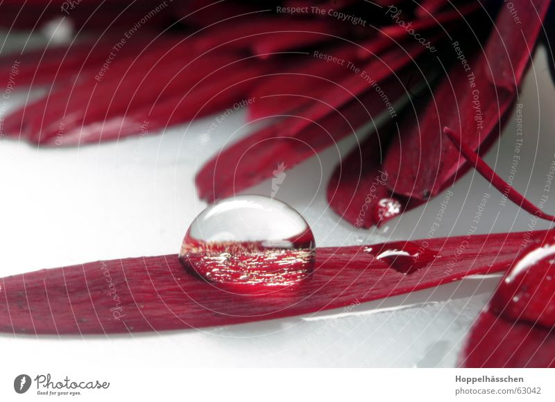 Water Red Glass Mirror