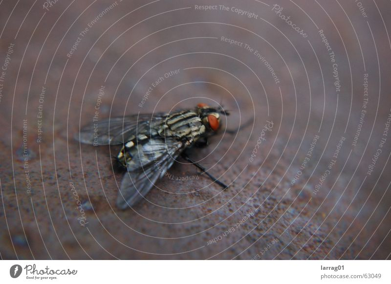 Nature Old Vacation & Travel Cold Metal Fear Dirty Small Fly Flying Railroad Wing Insect Rust Transparent Disgust