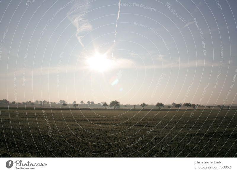 Nature Tree Sun Far-off places Grass Field Fog
