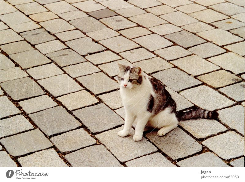 mimicry Cat Sidewalk Camouflage Domestic cat Animal Mammal Dappled Sweet Cute Stone Floor covering jog photocase Paving stone