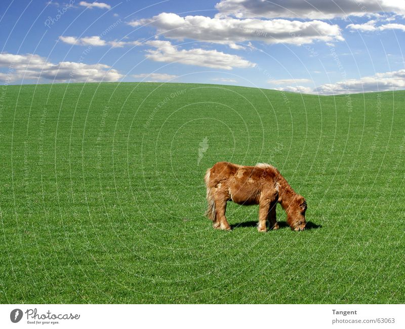 Sky Green Blue Clouds Calm Animal Environment Grass Baby animal Background picture Horse Hill Pelt Pasture To feed Pony