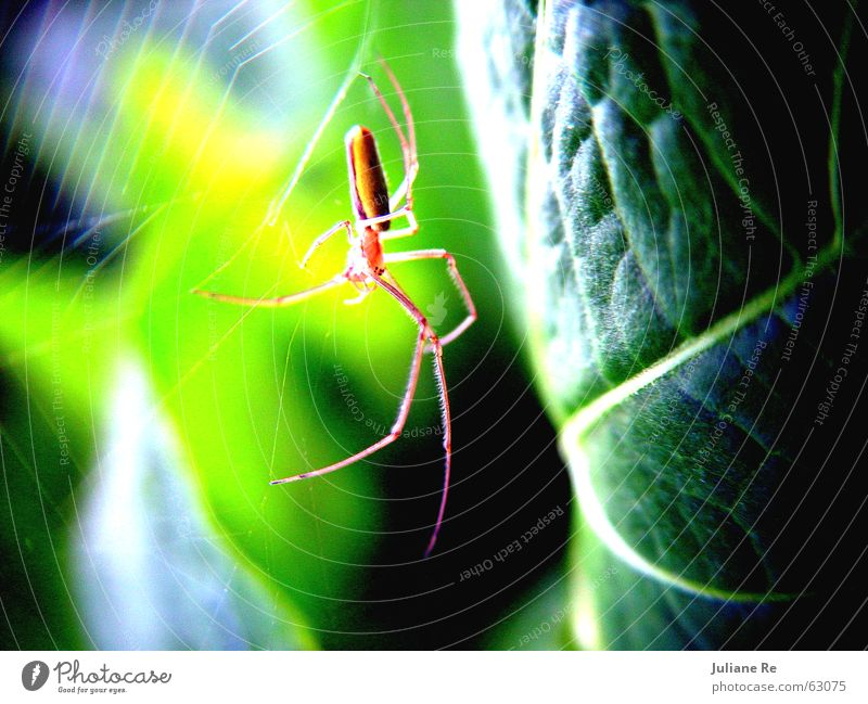 Nature Green Leaf Animal Life Net Insect Spider