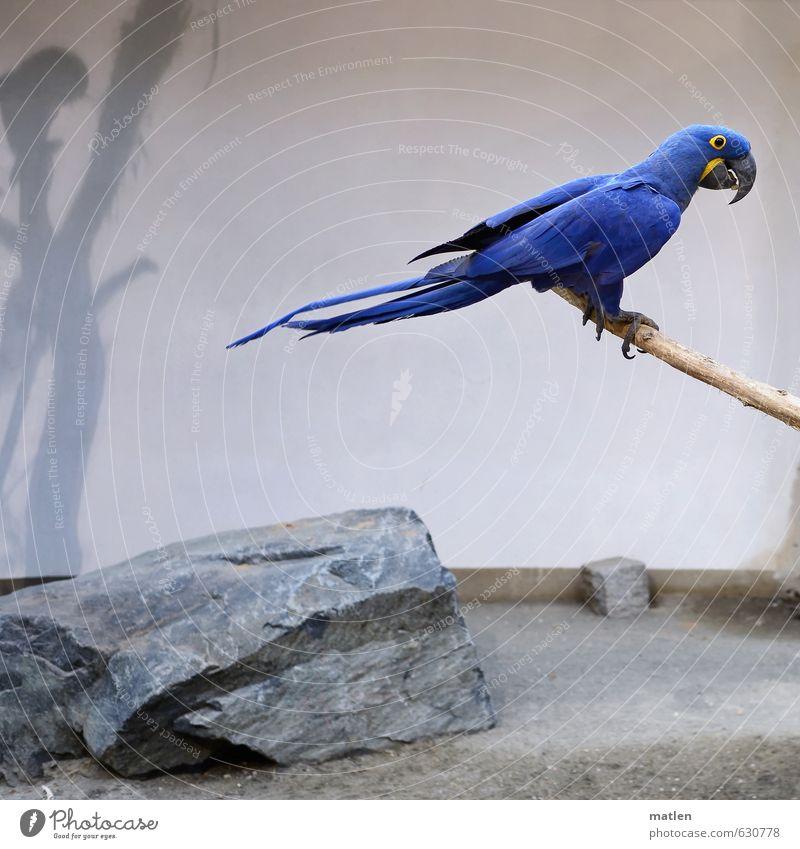 Blue White Animal Gray Bird Sit