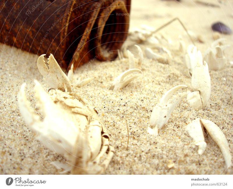 Nature Old Ocean Red Beach Nutrition Animal Life Dark Death Lanes & trails Sand Bright Coast Fear Food