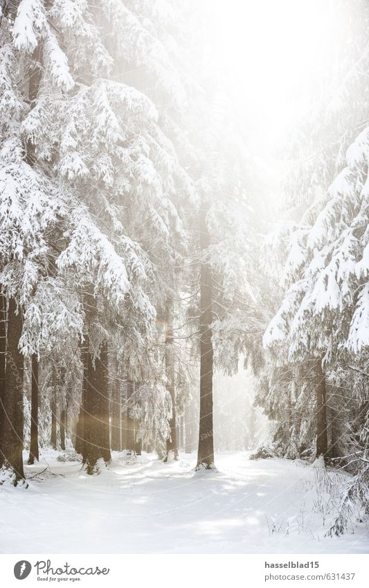 Vacation & Travel Relaxation Calm Joy Winter Forest Cold Mountain Life Snow Healthy Happy Contentment Tourism Hiking Trip