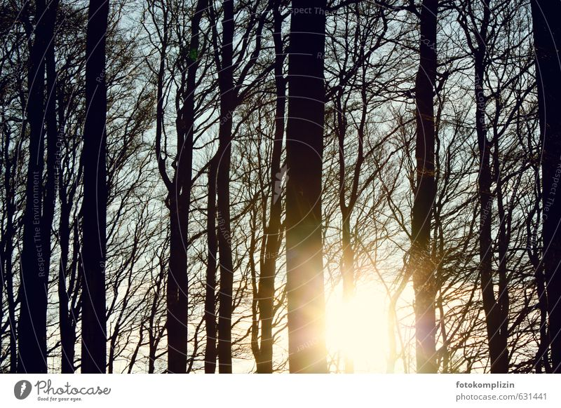 winter light trees Sunlight Autumn Winter Tree Forest Above Agreed Hope Grief Longing Transience tranquillity Serene Freedom Nature Optimism Perspective Moody