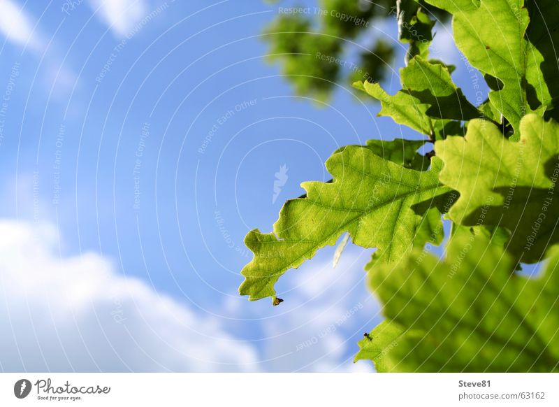 Nature Sky White Tree Sun Green Blue Summer Leaf Clouds Relaxation Air Perspective Branch Breathe Beautiful weather