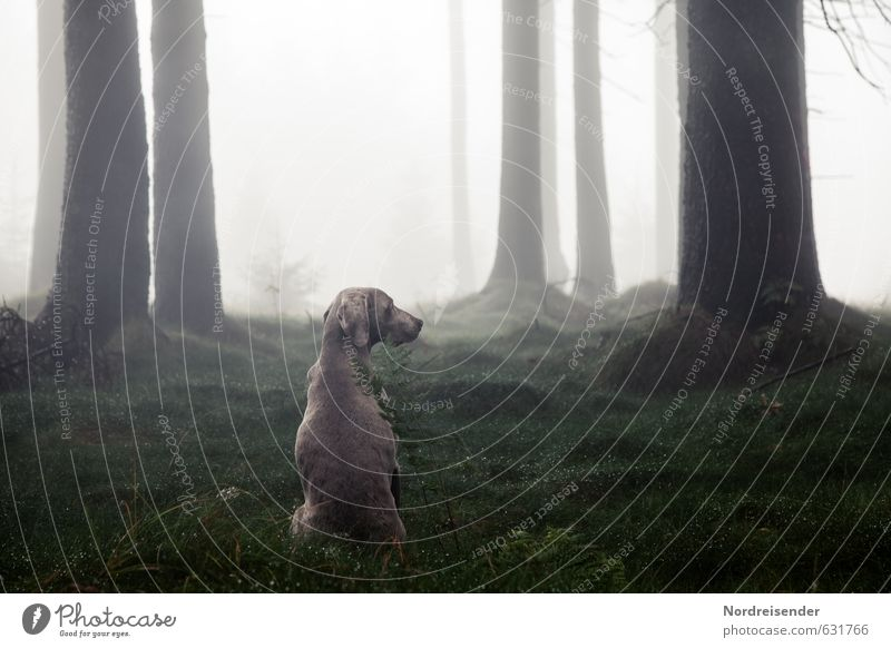 attention Life Relaxation Calm Hunting Drops of water Weather Fog Tree Forest Animal Dog Willpower Trust Safety Protection Love of animals Watchfulness Esthetic