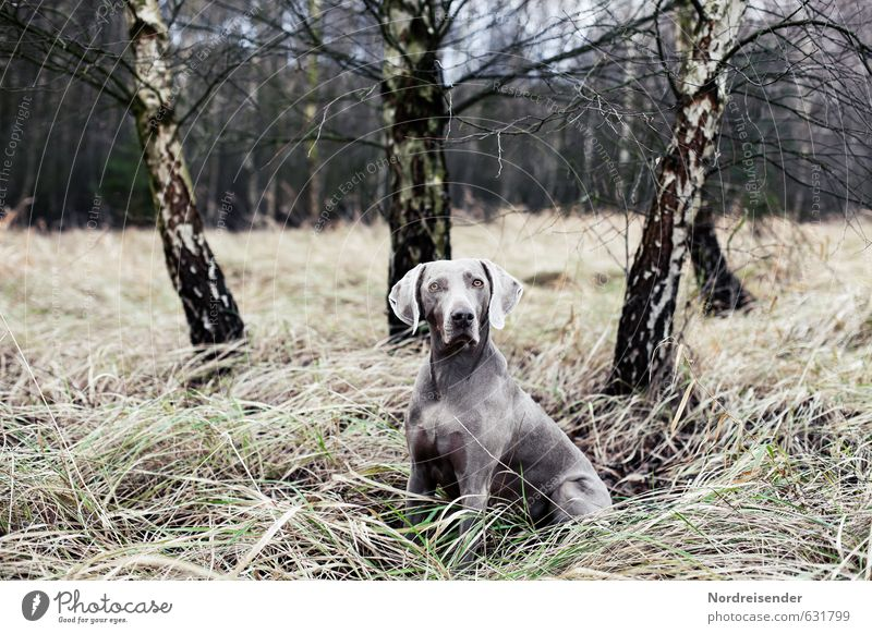 Dog Nature Tree Landscape Animal Forest Grass Freedom Leisure and hobbies Elegant Curiosity Serene Watchfulness Brave Hunting Expectation