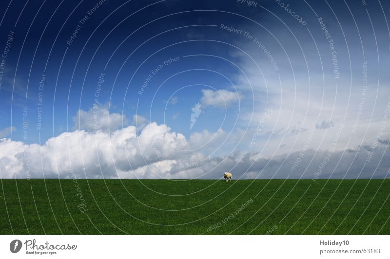 Sky Green Blue Clouds Meadow Landscape Background picture