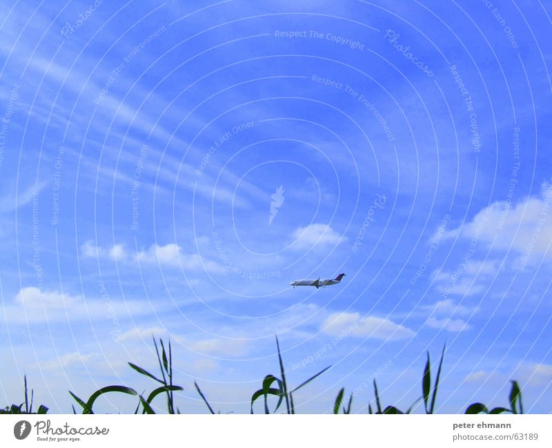 just fly into the blue Airplane Vacation & Travel Far-off places Clouds Grass Wanderlust Horizon Green Passenger plane Blue Sky flying holiday vacation