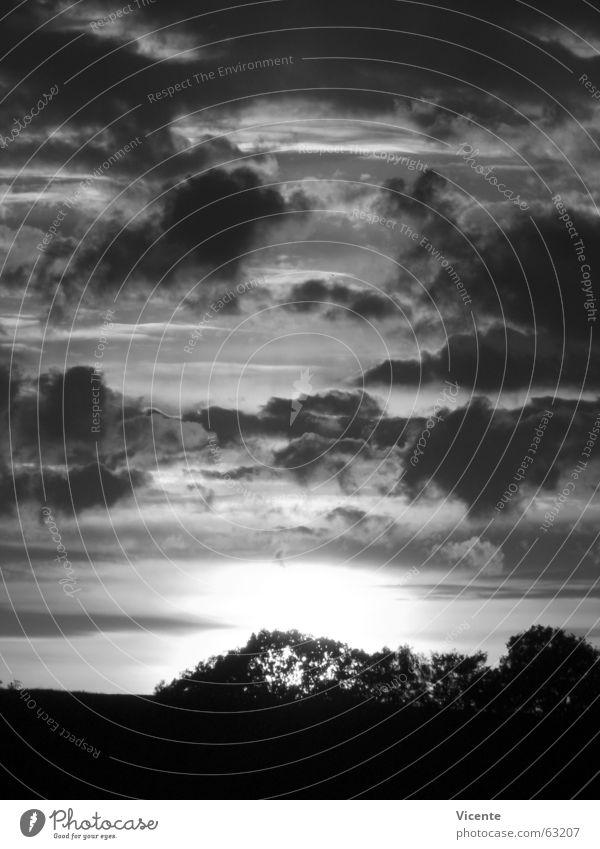event horizon Sunset Clouds Stratocumulus Twilight Black White Gray Monochrome Tree Bushes Horizon Loneliness Deserted Light Dark Night Black & white photo Sky
