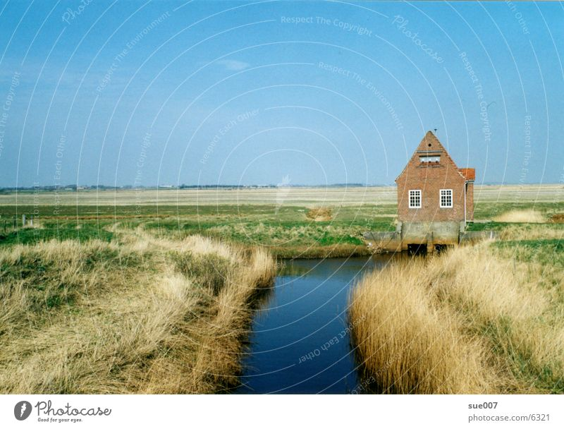 House (Residential Structure) Meadow Coast North Sea Denmark Plain