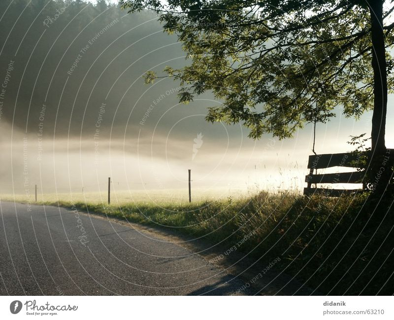 Summer morning Tree Forest Spruce Fog Ground fog Moody Dew Meadow with fence mill district Pasture Lanes & trails