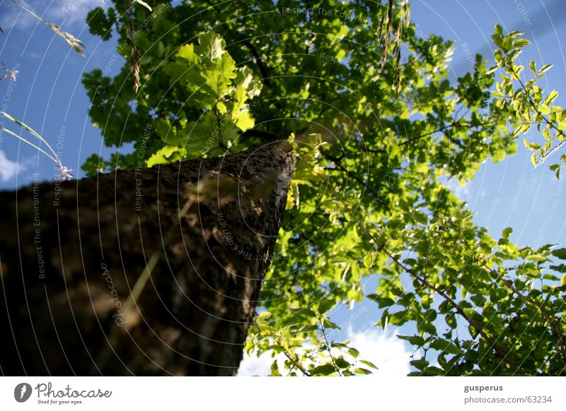 Beautiful Sky Tree Green Leaf Grass Weather Tree trunk Oak tree