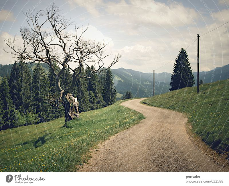 wanderlust Nature Landscape Elements Earth Summer Beautiful weather Tree Grass Forest Alps Lanes & trails Sign To enjoy Looking Hiking Esthetic Bizarre