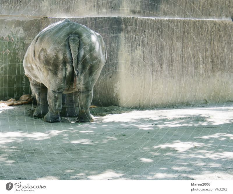 Loneliness Animal Funny Hind quarters Zoo Fat Fat Barcelona Rhinoceros