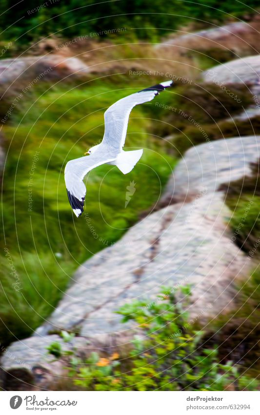 Nature Green Plant Landscape Animal Environment Emotions Coast Freedom Happy Rock Moody Bird Fly Feather Wing