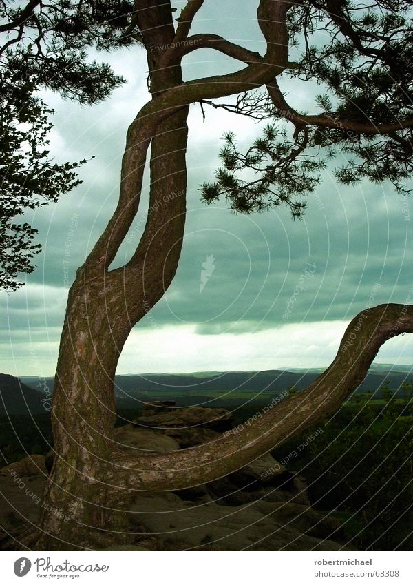 Is the sky falling on our heads? Tree Clouds Forest Sandstone Saxon Switzerland Saxony Vantage point Tree bark Bad weather Wind Raincloud Natural phenomenon