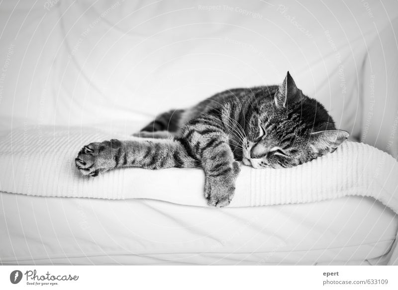 Cat Relaxation Calm Animal Lie Leisure and hobbies Living or residing Contentment Cute Sleep Soft Trust Serene Sofa Safety (feeling of)
