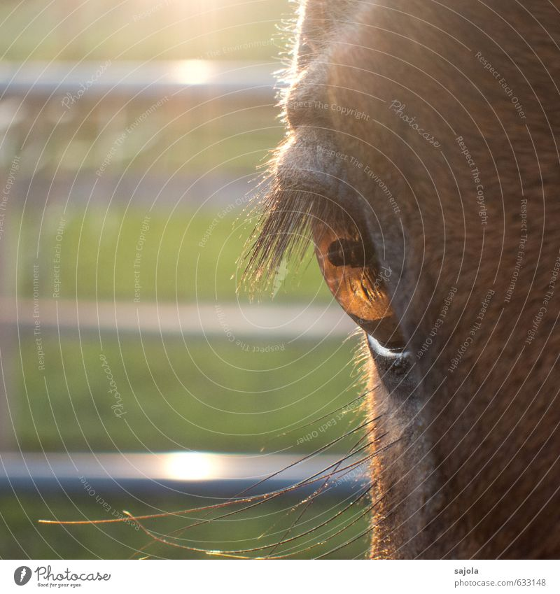 Look me in the eye, baby. Animal Farm animal Horse Animal face Eyes 1 Looking Horse's head Horse's eyes Eyelash Pupil Square Colour photo Exterior shot Close-up