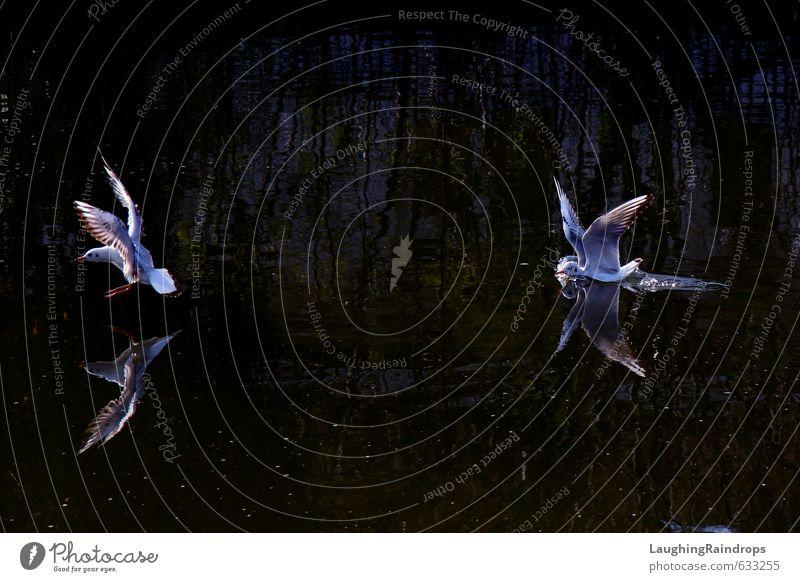 Blue White Water Black Swimming & Bathing Flying Dance Violet Seagull Swan