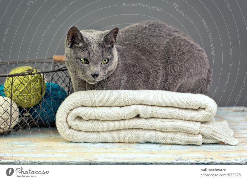 Cat Blue Beautiful Relaxation Animal Yellow Gray Metal Dream Lie Elegant Decoration Observe Soft Retro Pure