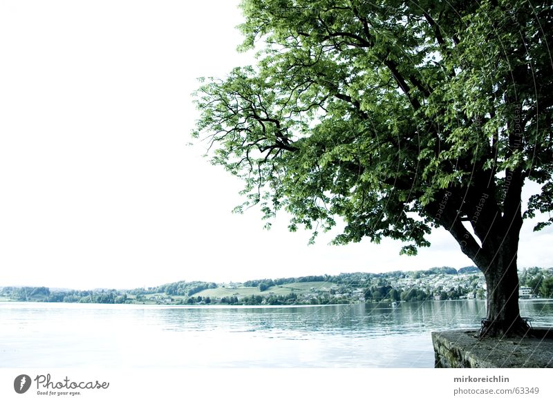 the tree Tree Lake Green sea bigway Bright
